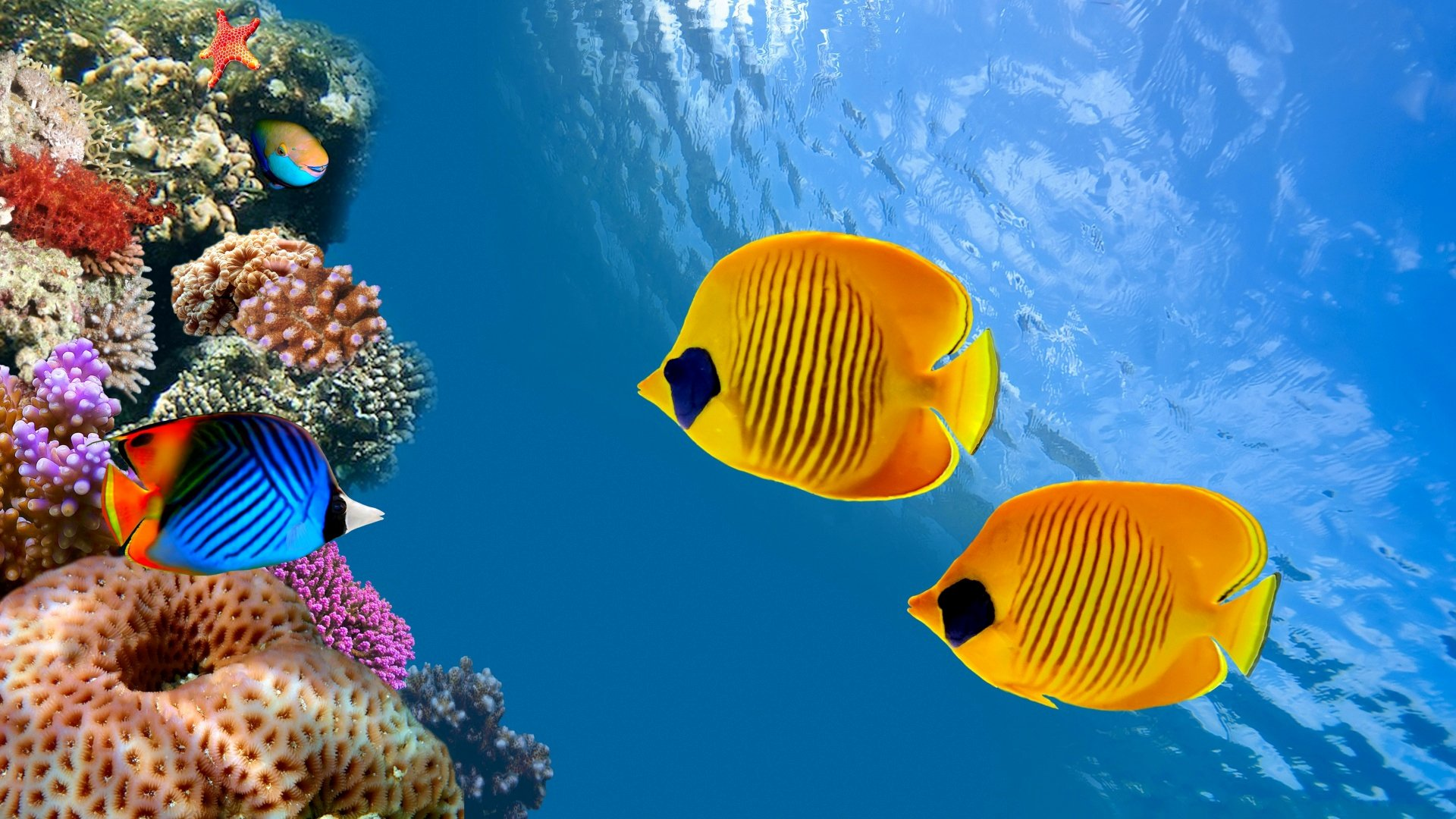 Fish Tank Background Pictures Luxury Aquarium Hd Wallpapers