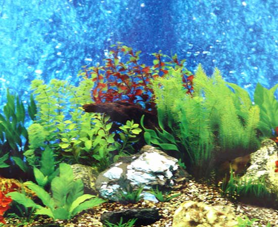 Fish Tank Background Pictures New Aquarium Backgrounds to Print Free Printable Background