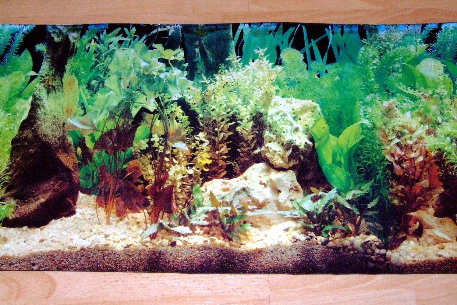 Fish Tank Background Printable Awesome Aquarium Background Scenes