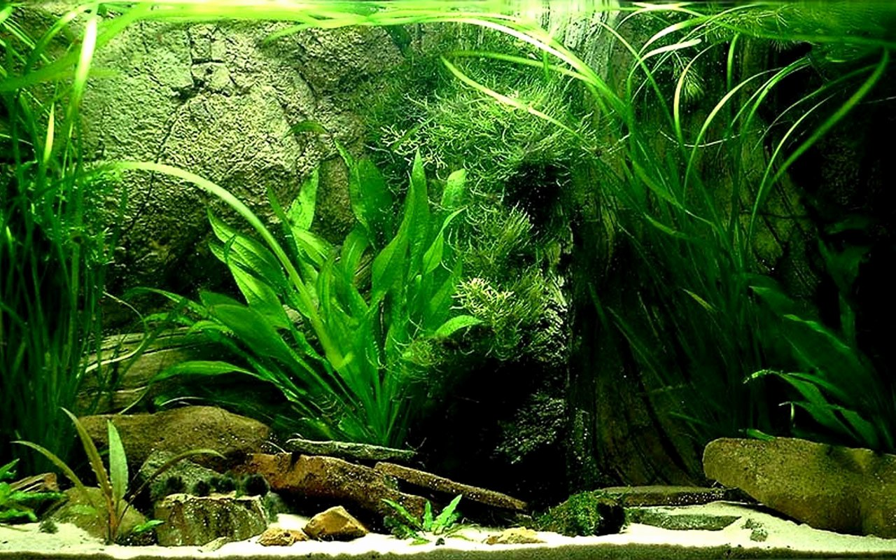 Fish Tank Background Printable Best Of Best 50 Freshwater Plants Background On Hipwallpaper