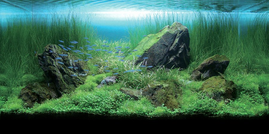 Fish Tank Background Printable Best Of Guppy Guide Creating Depth In An Aquascape Simple Tips