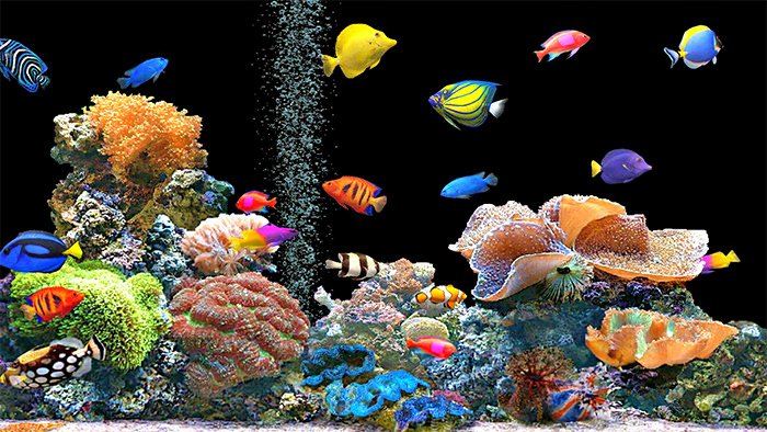 Fish Tank Background Printable Fresh 50 Best Aquarium Backgrounds