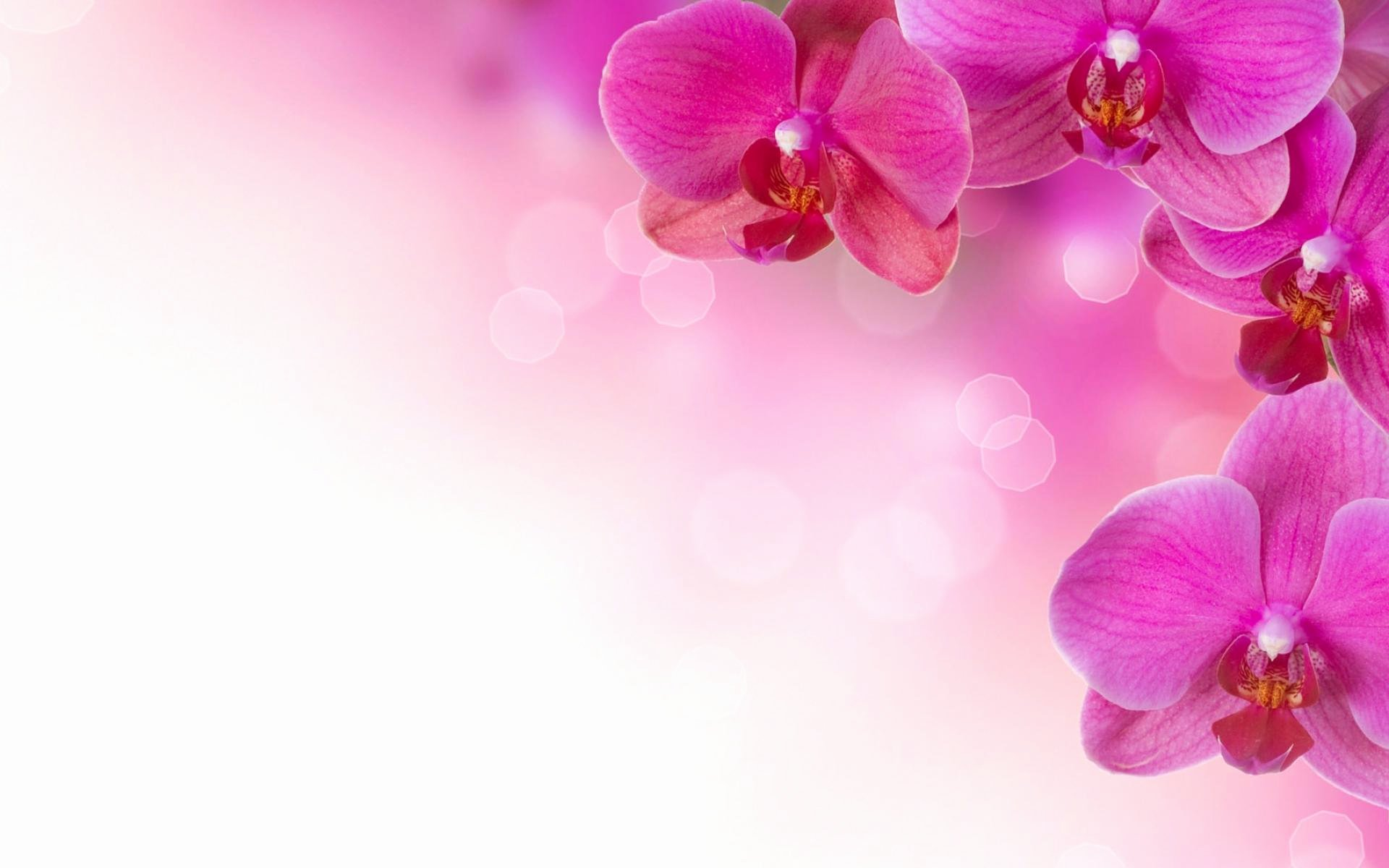 Flower Background Design Images Elegant Pink Flower Backgrounds Wallpaper Cave
