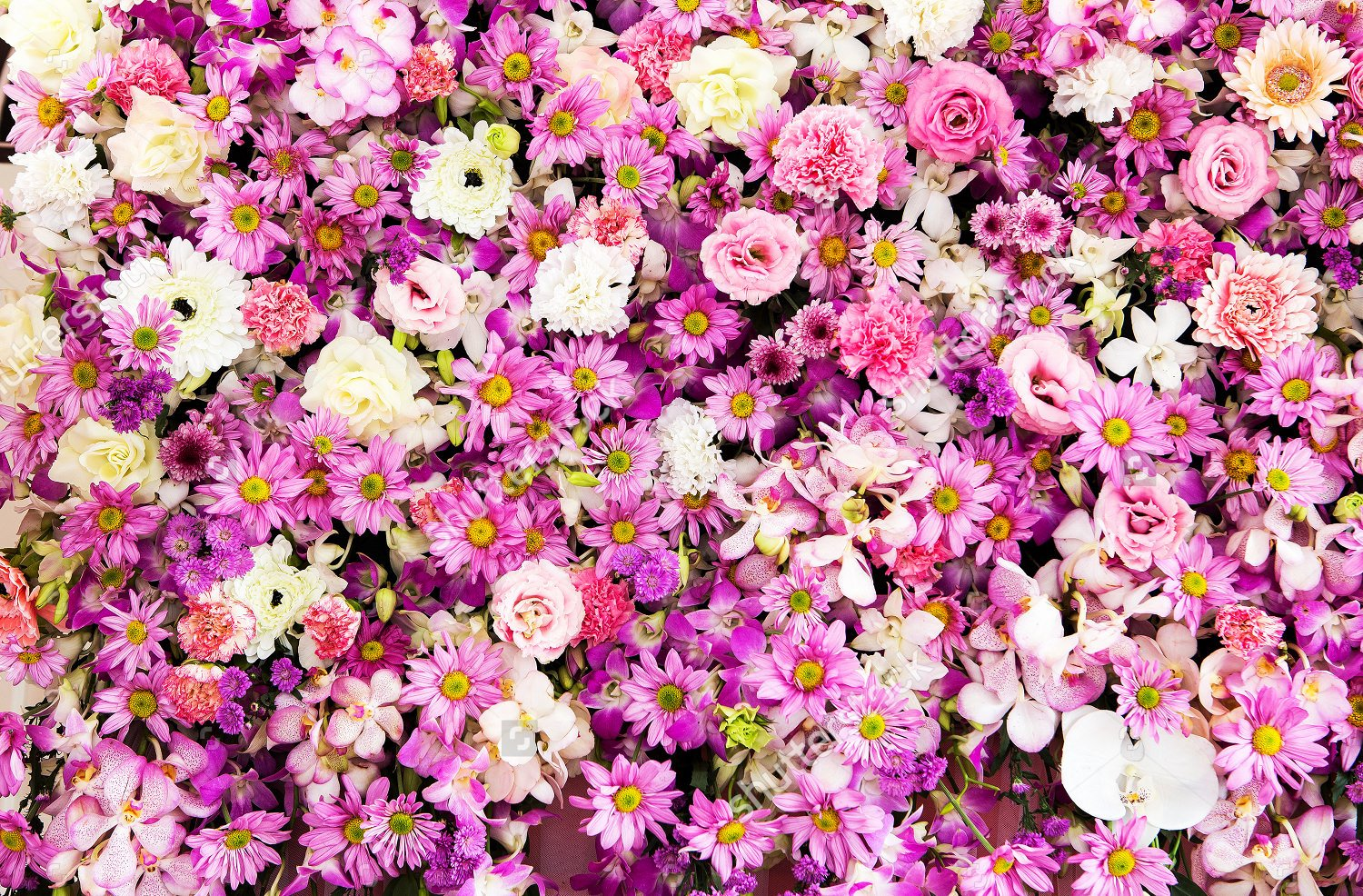 Flower Background Design Images Unique 27 Daisy Backgrounds Wallpapers