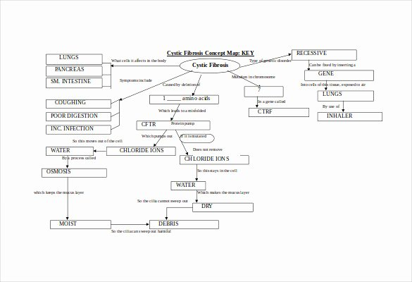 Free Concept Mapping Template Lovely Concept Map Template 10 Download Free Documents In Pdf
