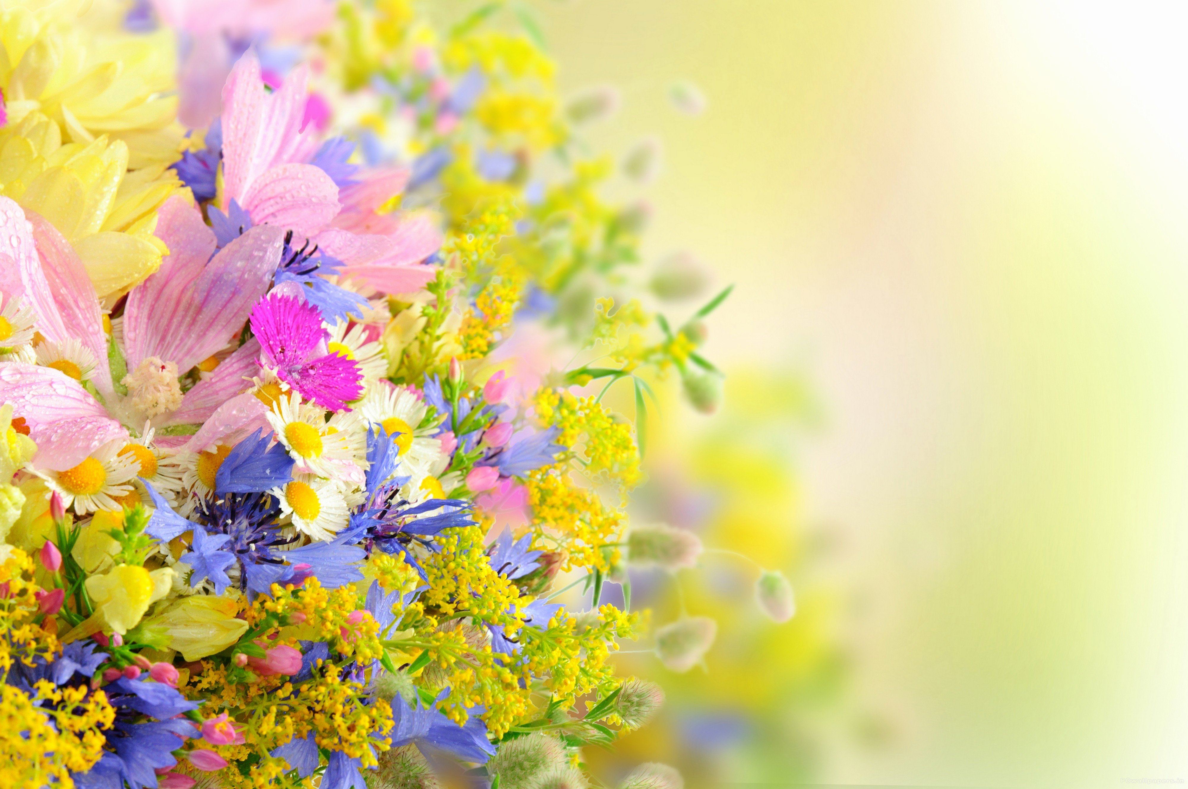 Free Flower Desktop Wallpaper Best Of Flower Wallpaper High Resolution