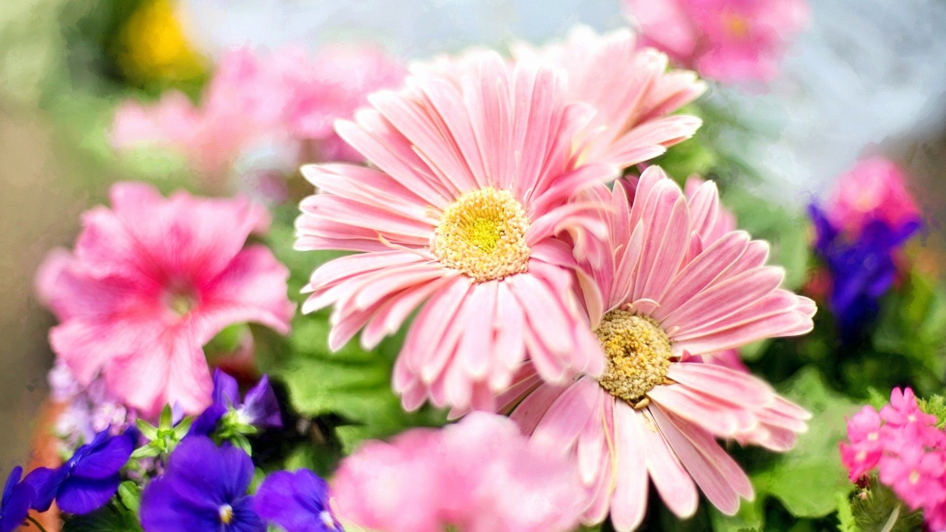Free Flower Desktop Wallpaper Fresh Pink Flower Desktop Wallpaper ·① Wallpapertag