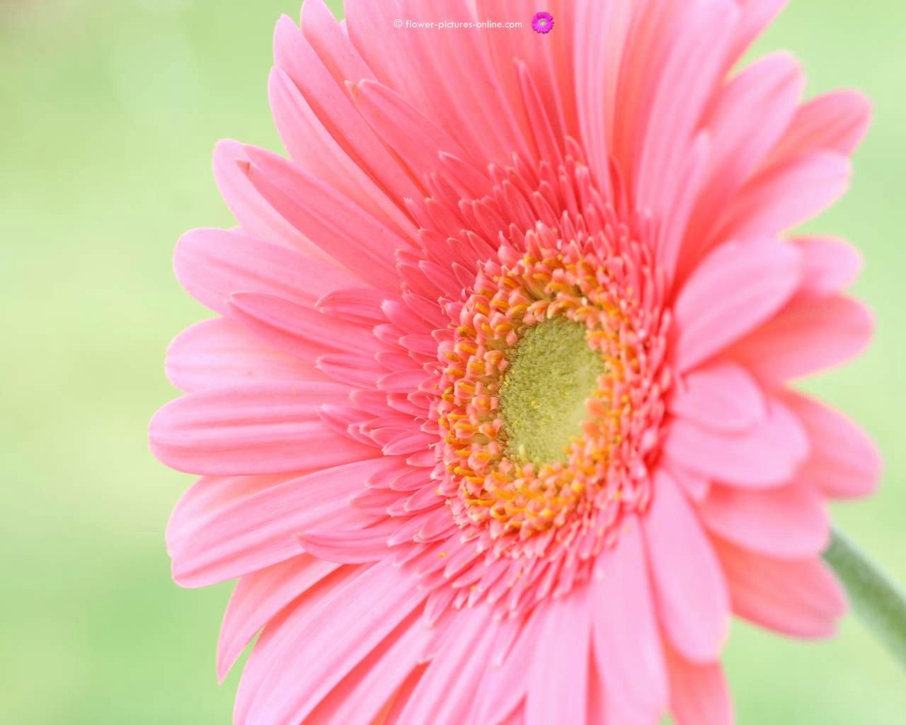 Free Flower Desktop Wallpaper Inspirational Flower Wallpapers for Puter Desktop Wallpaper Cave