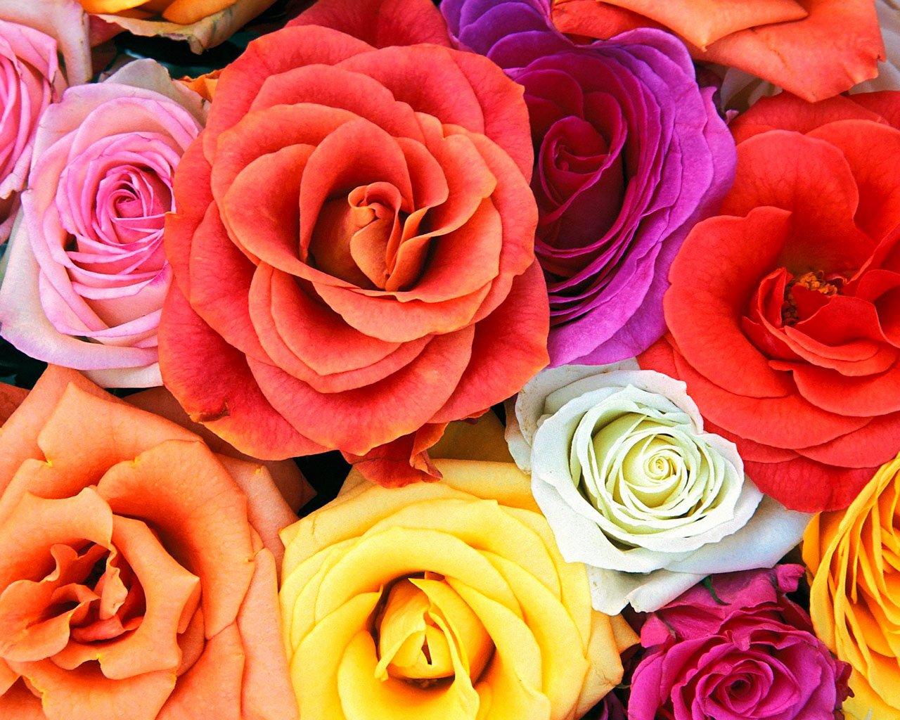 Free Flower Desktop Wallpaper Lovely Free Desktop Wallpapers
