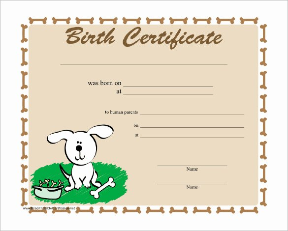 Free Printable Dog Birth Certificate Elegant Sample Birth Certificate 22 Documents In Word Pdf