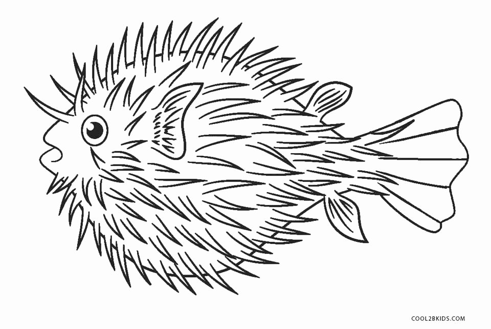 Free Printable Fish Pictures Inspirational Free Printable Fish Coloring Pages for Kids