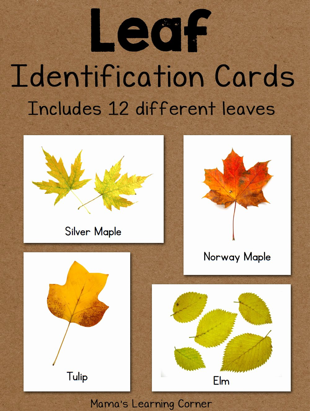Free Printable Id Cards Awesome Leaf Identification Cards Mamas Learning Corner