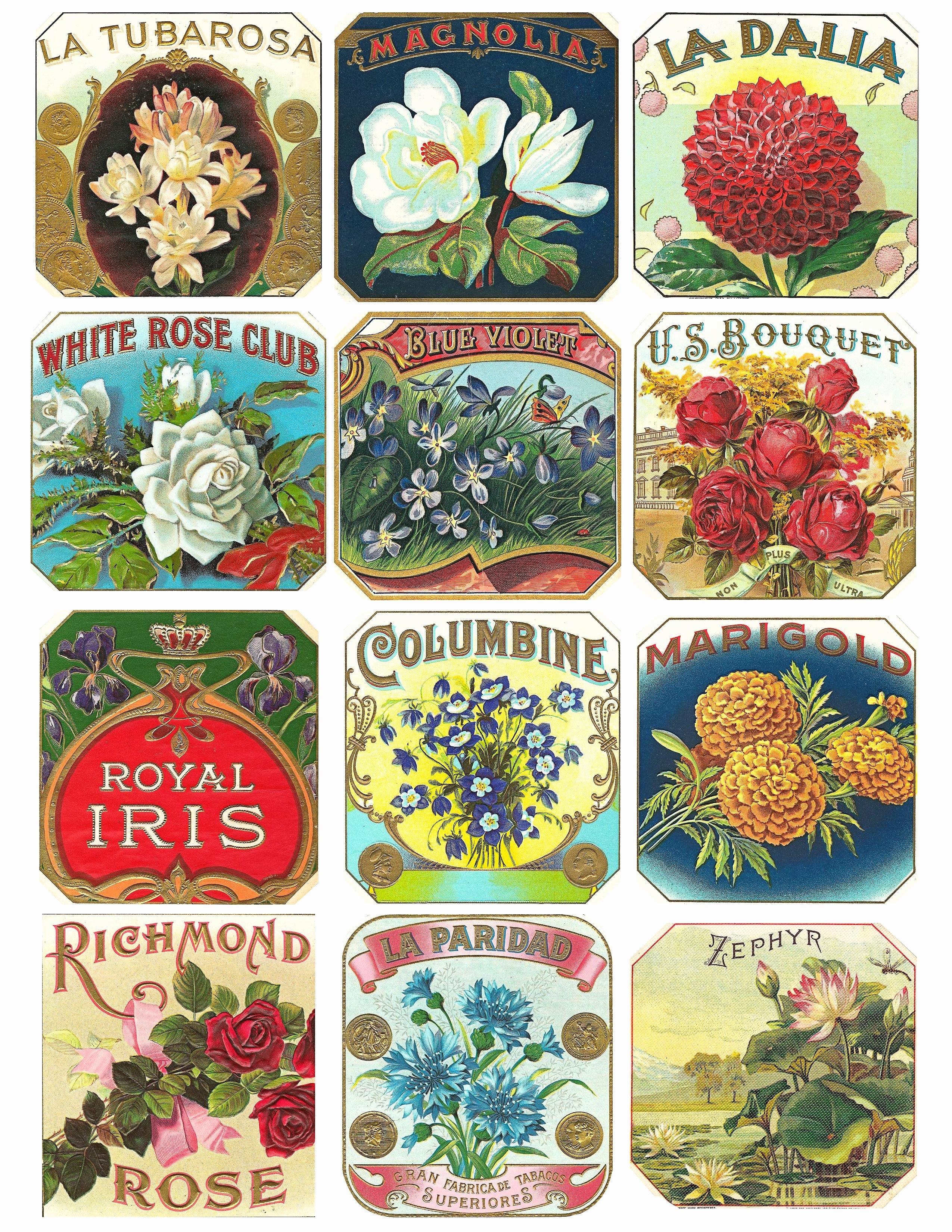 Free Printable Vintage Labels Elegant Free Vintage Floral Cigar Label Graphics