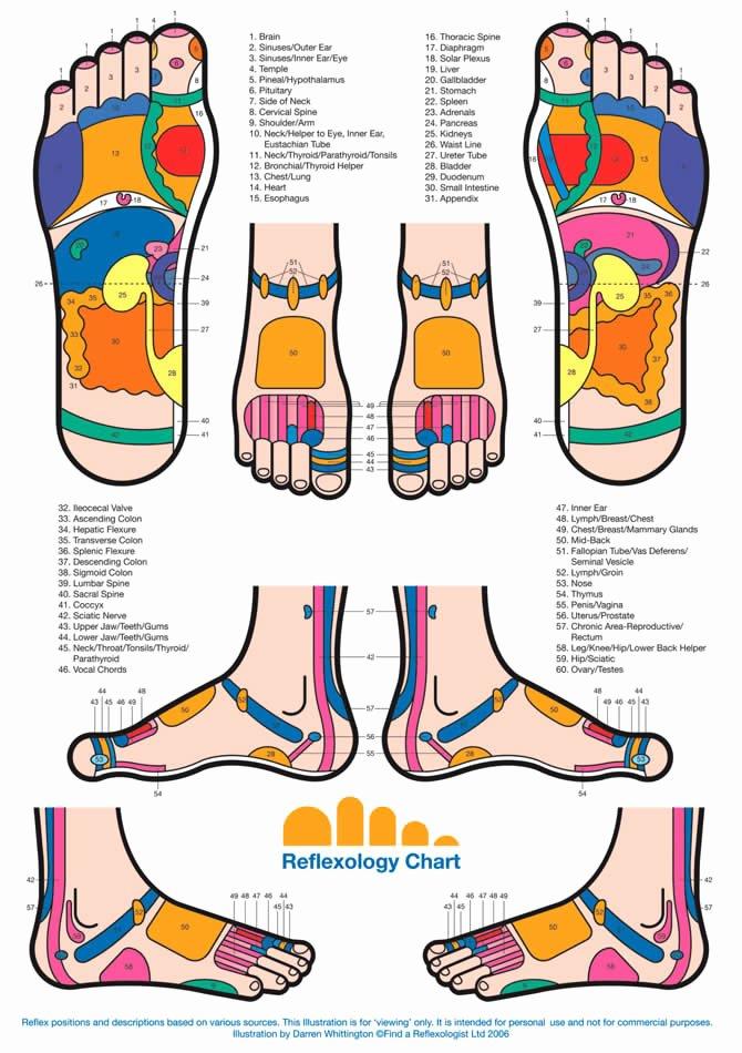 Free Reflexology Foot Chart Beautiful Reflexology Charts