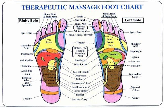 Free Reflexology Foot Chart Beautiful Super Duo therapeutic Magnetic Massager