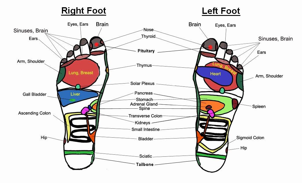 Free Reflexology Foot Chart Best Of Foot Massage Chart Reflexology Charts Holistic Massage
