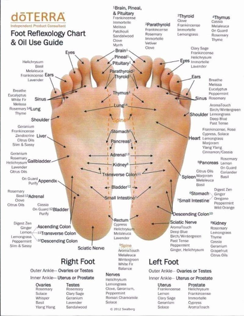 Free Reflexology Foot Chart Fresh 31 Printable Foot Reflexology Charts & Maps Template Lab