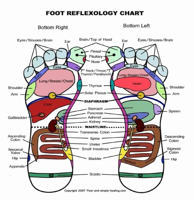 Free Reflexology Foot Chart Fresh Free Reflexology Foot Charts 35 Free Printables Word