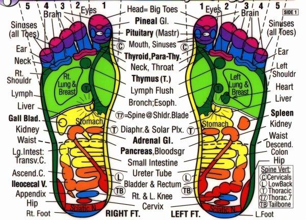 Free Reflexology Foot Chart Luxury 25 Best Foot Massage Diagram Ideas On Pinterest
