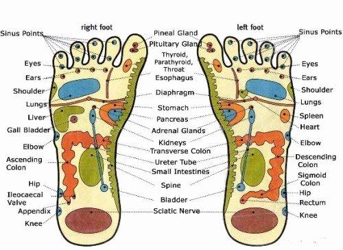 Free Reflexology Foot Chart Luxury Free Reflexology Charts