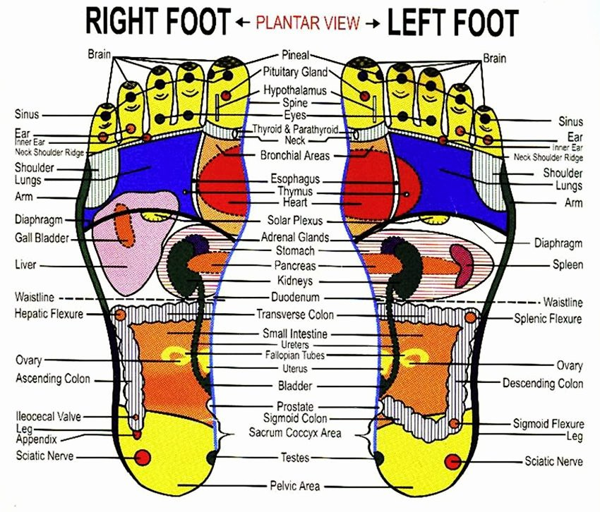 Free Reflexology Foot Chart Luxury Prepare to Meet the Lord September 2013