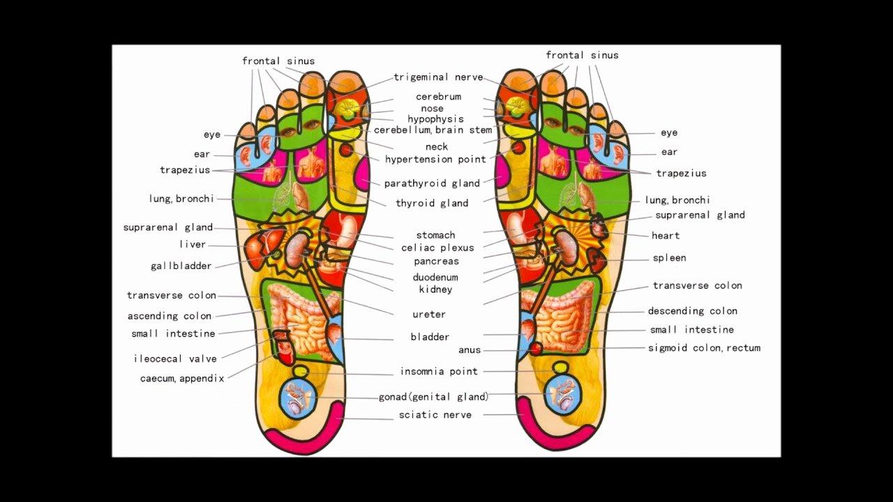 Free Reflexology Foot Chart New Foot Reflexology Map for Beginners 1