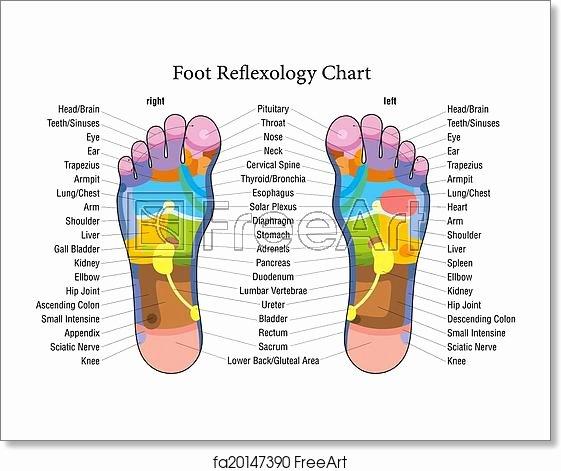 Free Reflexology Foot Chart New Free Art Print Of Foot Reflexology Chart Description Foot