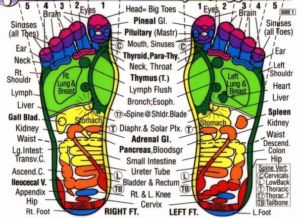 Free Reflexology Foot Chart Unique ashiyu