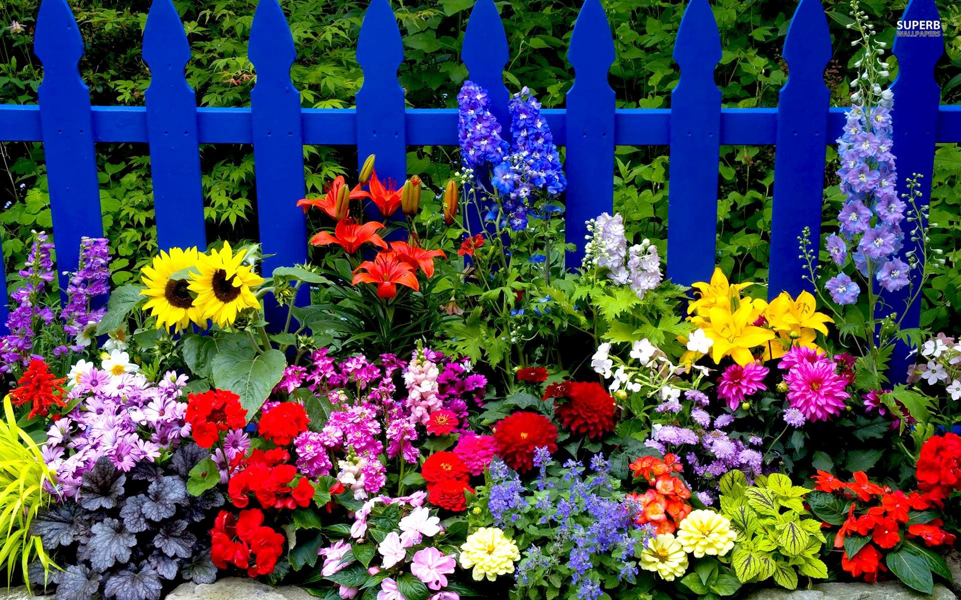 Free Summer Background Images Fresh Summer Flowers Wallpapers Wallpaper Cave