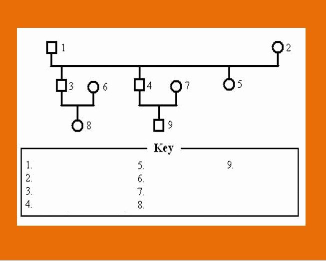 Genogram Template Microsoft Word Unique 30 Free Genogram Templates & Symbols Free Template Downloads