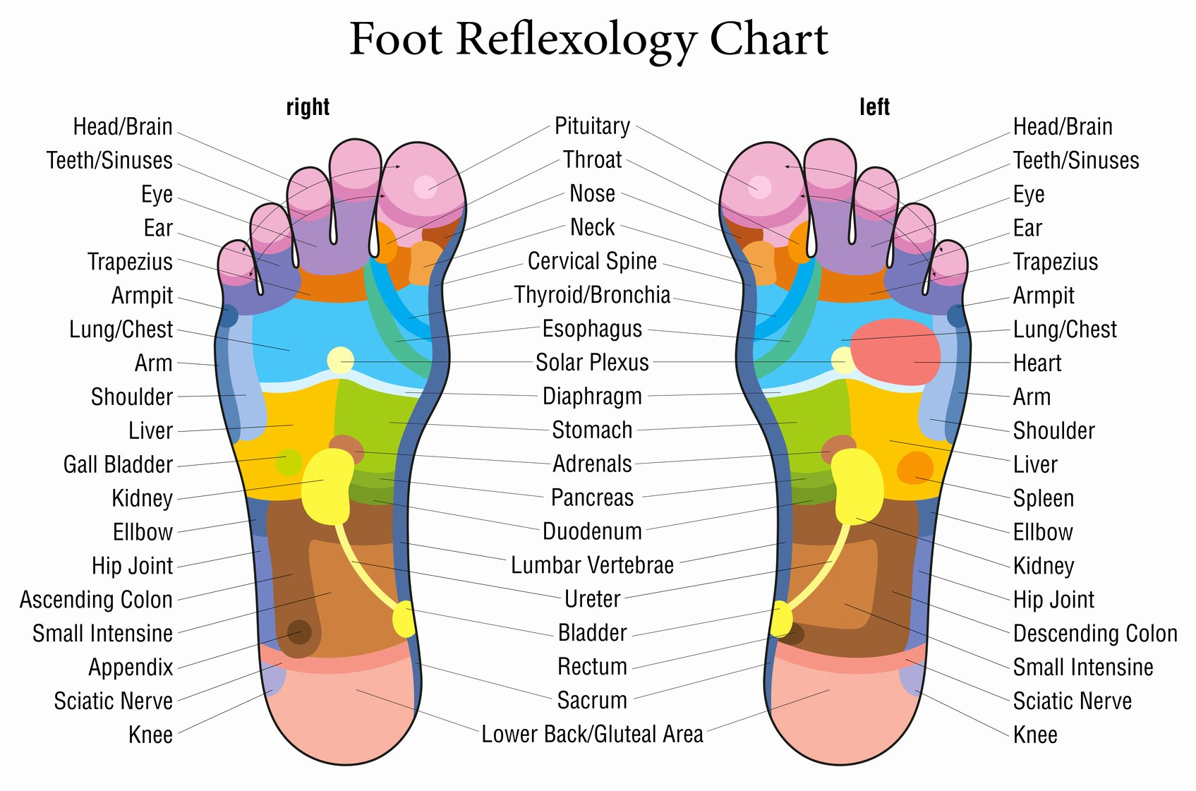 Hand and Foot Reflexology Chart Awesome This is What Happens when You touch these Points Your Feet