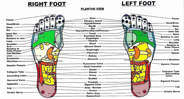 Hand and Foot Reflexology Chart Best Of All About Reflexology