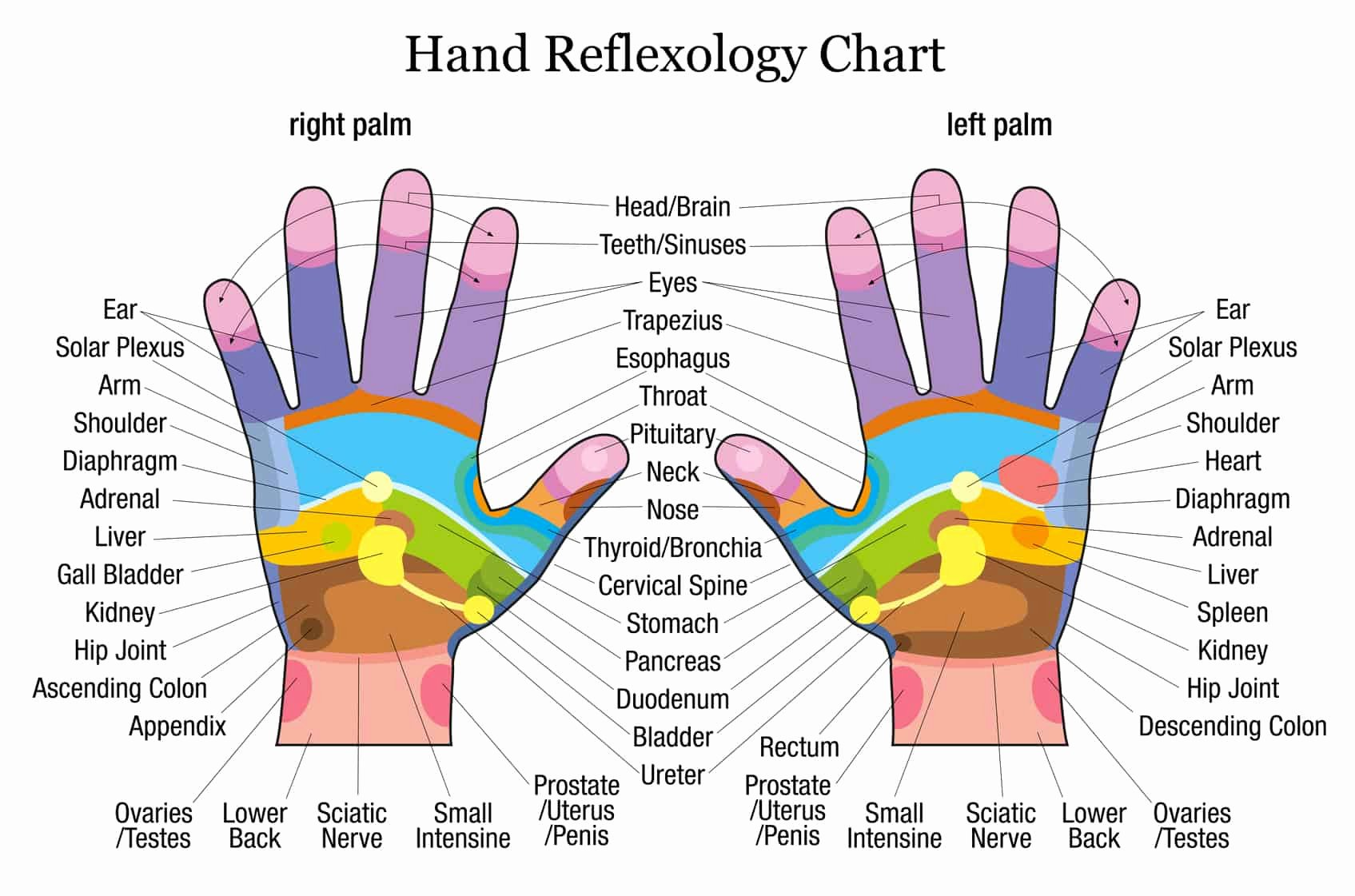 Hand and Foot Reflexology Chart Fresh Hand therapy
