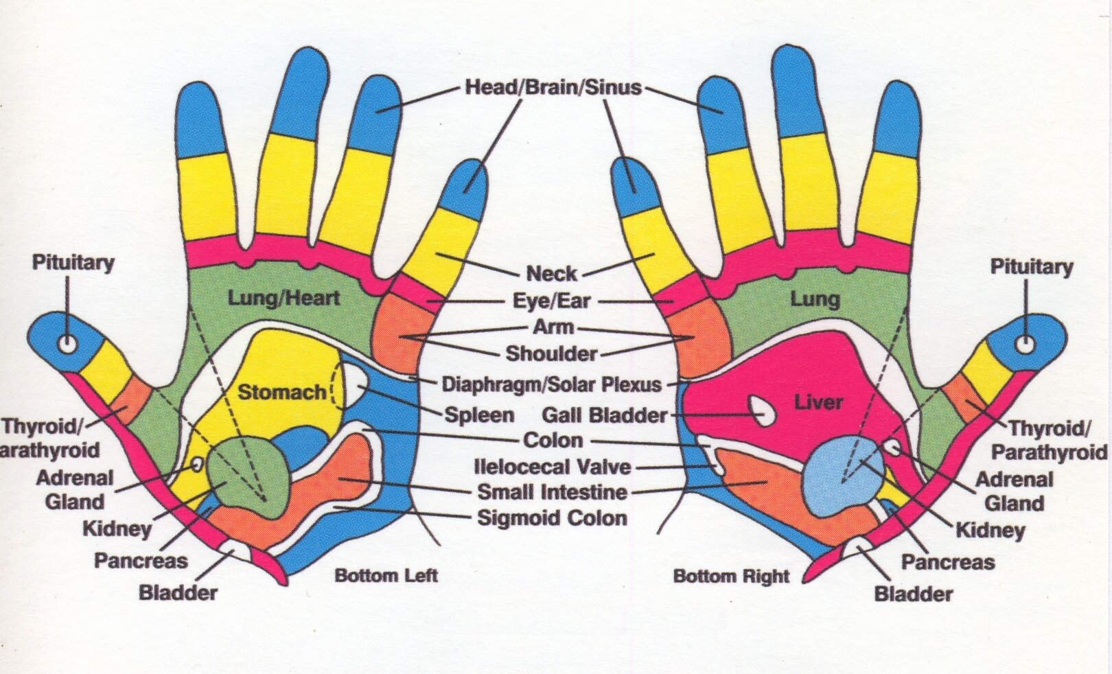 Hand and Foot Reflexology Chart Fresh Om Reflexology – Natural Healthcare – Owensboro Ky and
