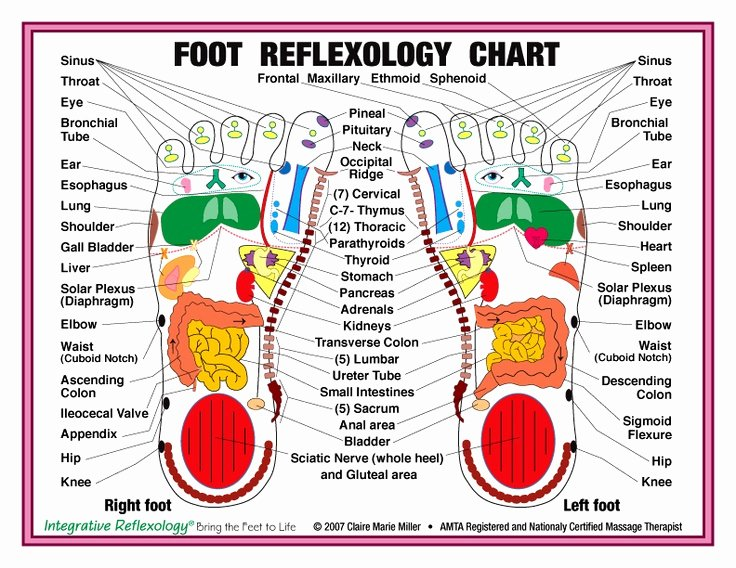 Hand and Foot Reflexology Chart Fresh Reflexology Foot Chart Health Pinterest