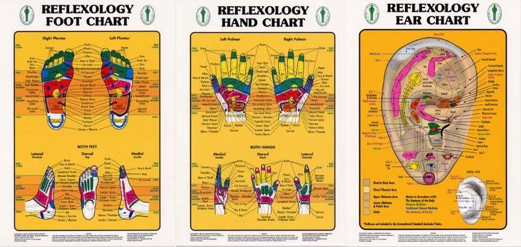 Hand and Foot Reflexology Chart Fresh Study Charts Reflexology Training Courses