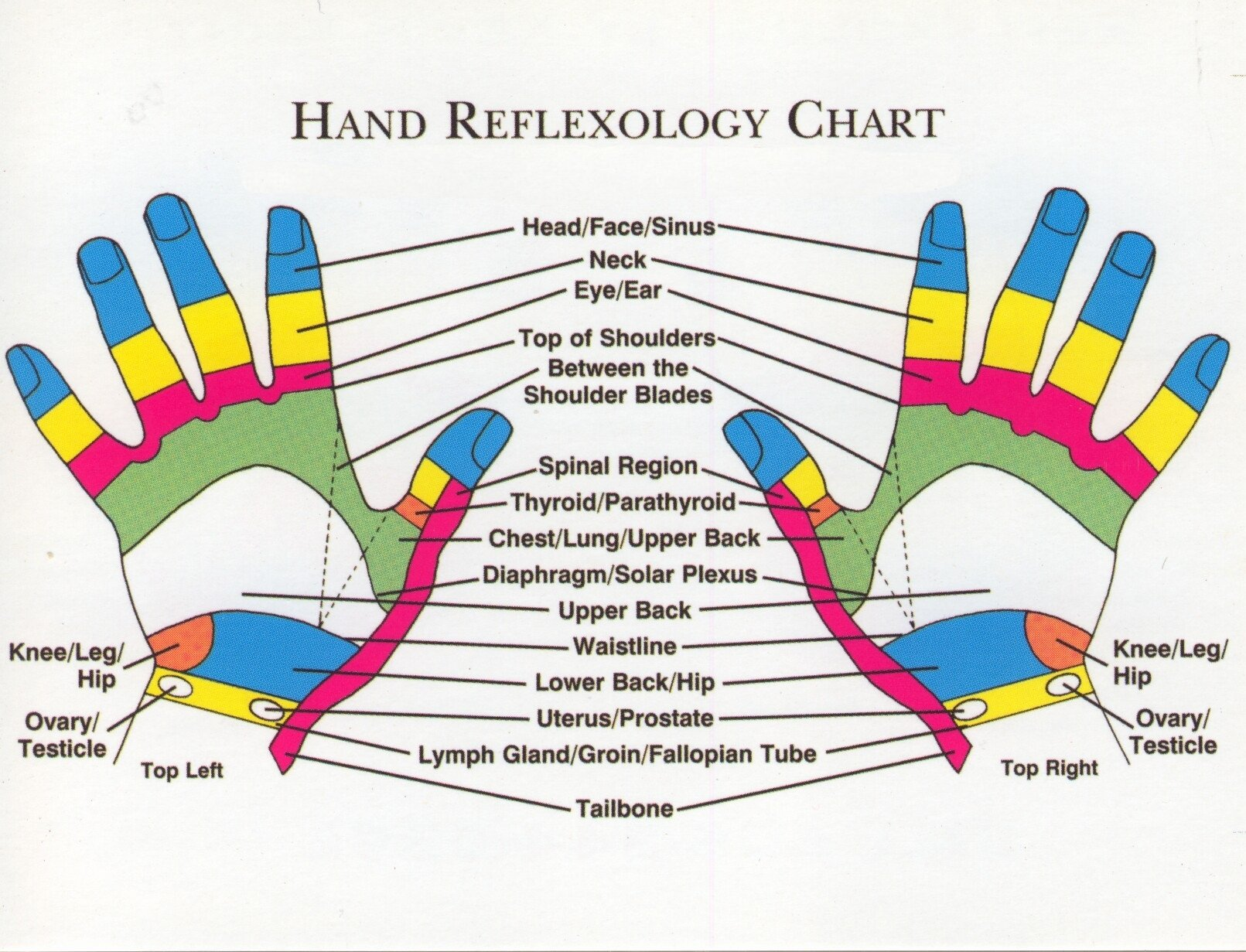 Hand and Foot Reflexology Chart Inspirational Does Pressure Point therapy Reflexology Really Work