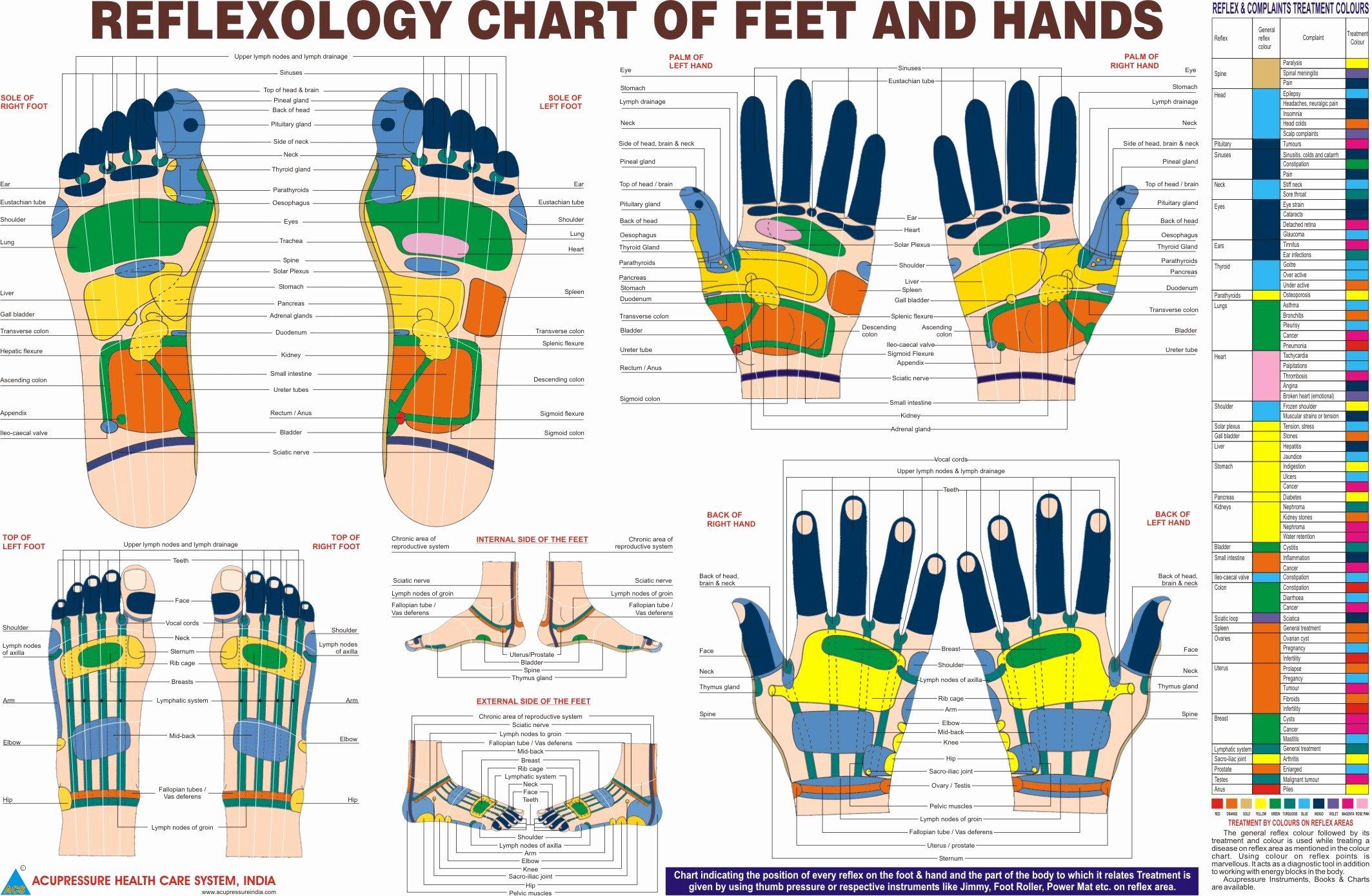Hand and Foot Reflexology Chart Inspirational Reflexology Chart