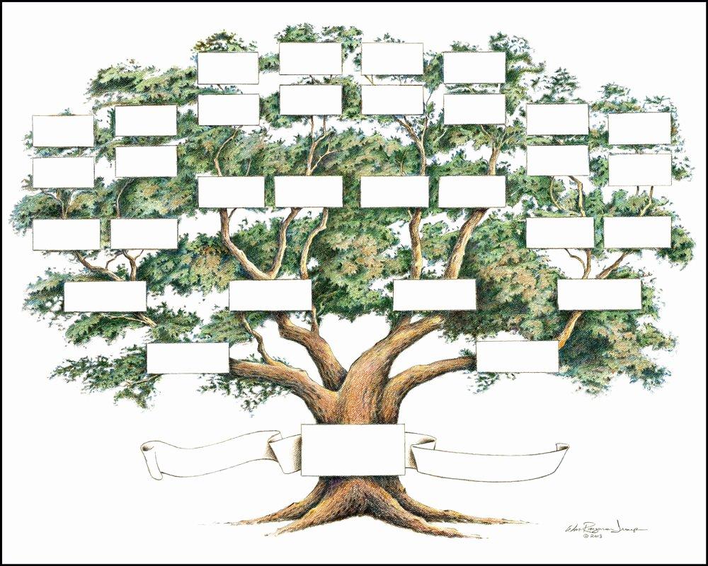Large Family Tree Templates Fresh Family Tree Chart 5 to 6 Generations Genealogy 14x18