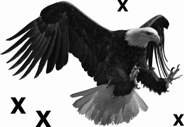 Multi Layer Stencils for Sale Luxury Bald Eagle In Flight Airbrush Stencil – Multi Layer Stencils
