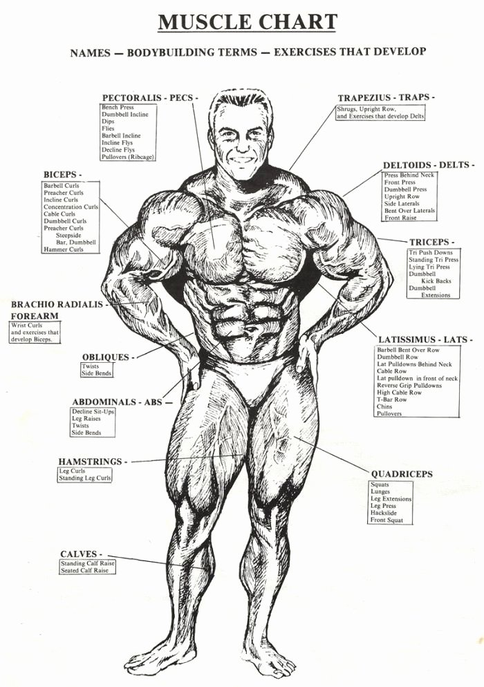 Muscle Anatomy Chart Inspirational Check the Best Bodybuilding Website Like and