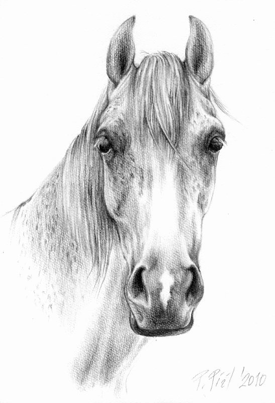 Pencil Sketches Of Horses Awesome Horse Head Drawings In Pencil
