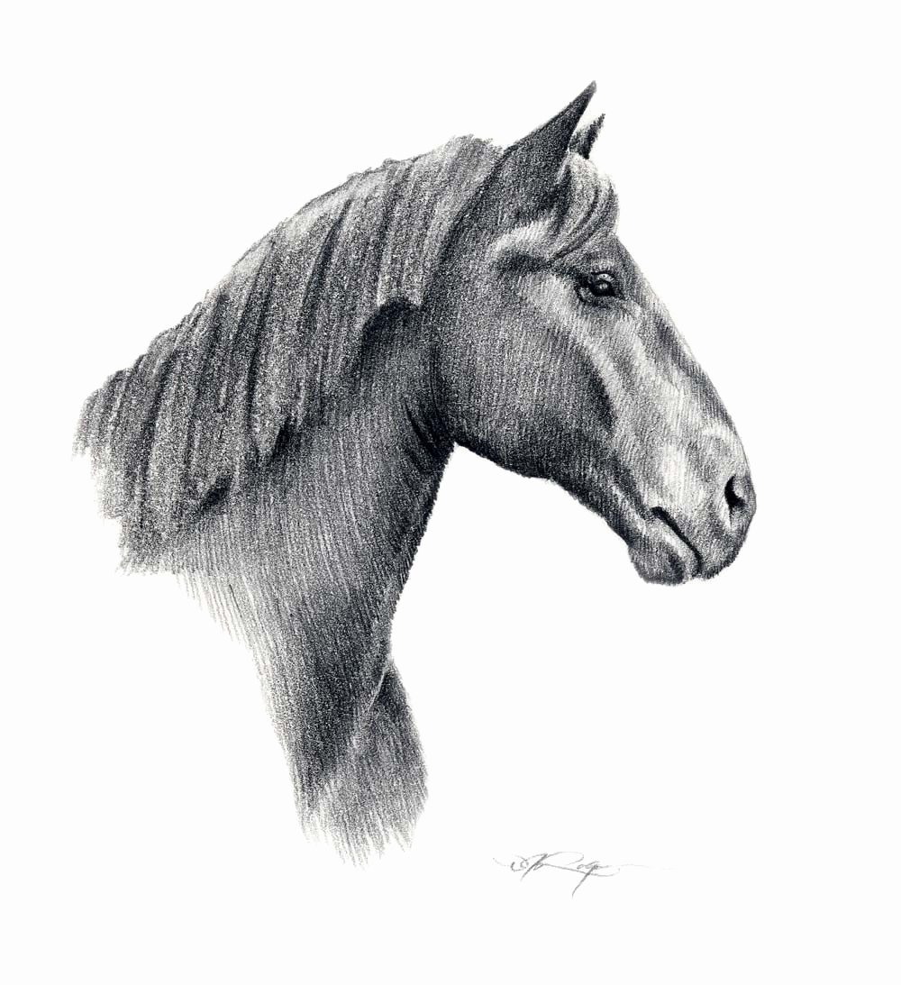 Pencil Sketches Of Horses Awesome Percheron Horse Pencil Drawing Art Print Signed by Artist Dj
