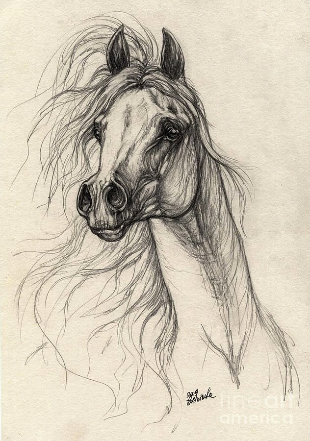 Pencil Sketches Of Horses Beautiful 25 Best Ideas About Horse Drawings On Pinterest