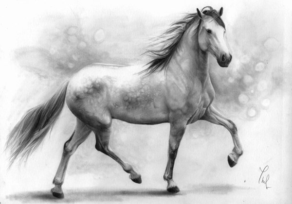 Pencil Sketches Of Horses Beautiful August 2014