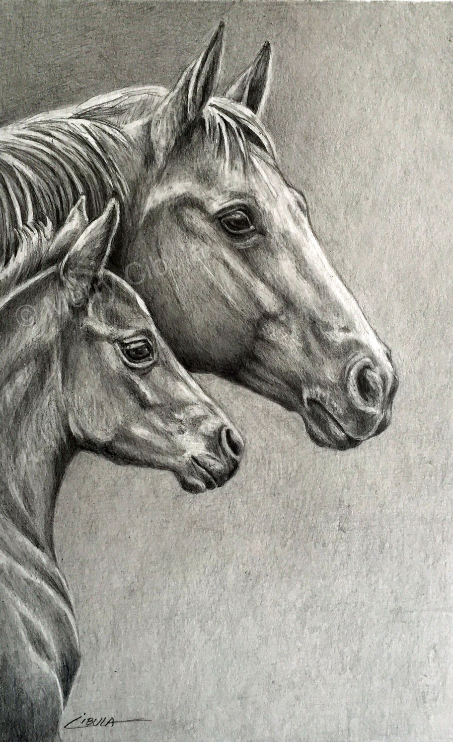 Pencil Sketches Of Horses Beautiful Equine Art An original Equine Graphite Pencil Drawing Of A