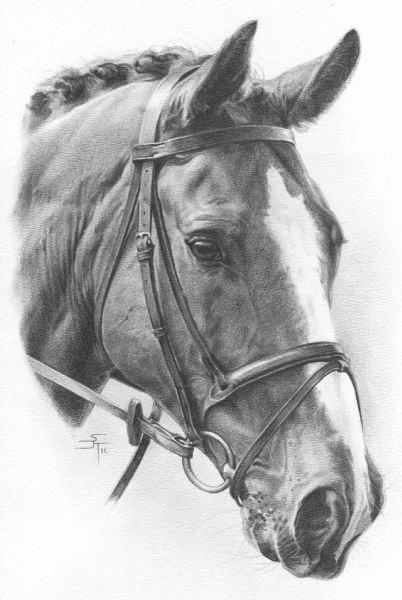 Pencil Sketches Of Horses Best Of Best 25 Horse Drawings Ideas On Pinterest