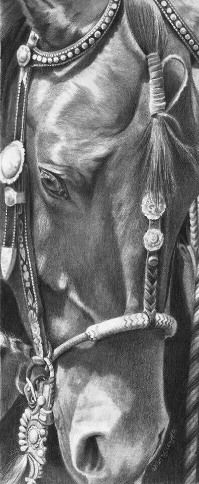 Pencil Sketches Of Horses Best Of Horse Sketch Of Face and Bridle Gorgeous Horse Art Horse