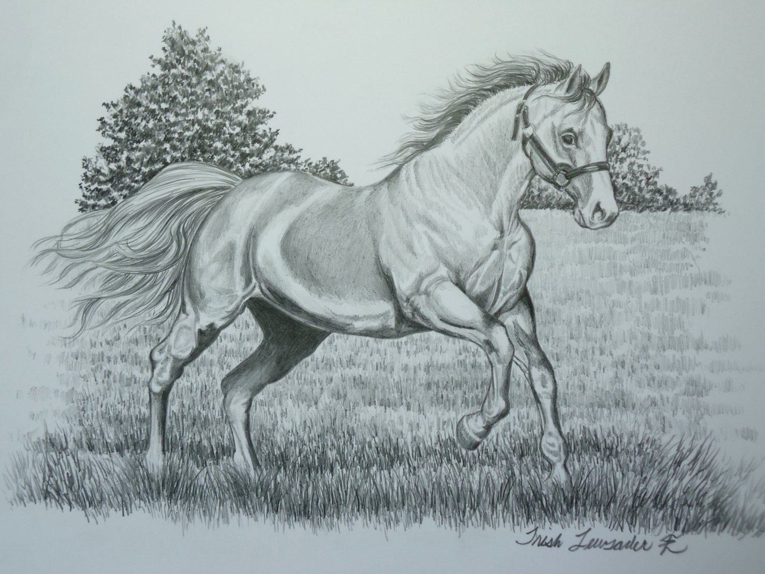 Pencil Sketches Of Horses Best Of original Pencil Drawing Of A Horse Running by