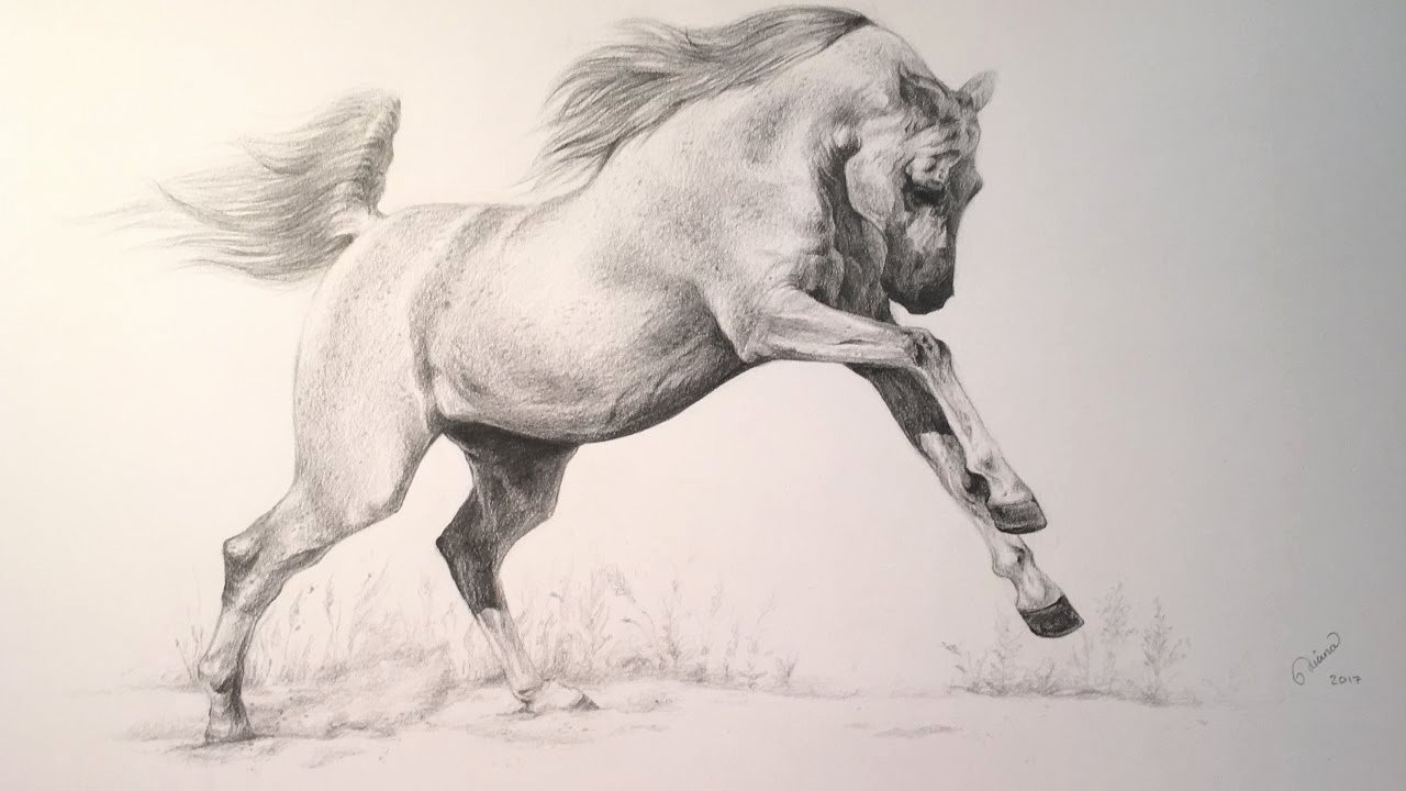 Pencil Sketches Of Horses Elegant Arabian Horse Pencil Drawing Full Process